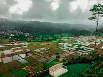 Mooie landschapsmening van padievelden en een witte parkbank bij de heuvel van kaisanti, tomohon Indonesië stock afbeeldingen