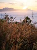 Mooie landschapspartij van mist Phu Thok Stock Fotografie