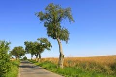 Mooie landweg Royalty-vrije Stock Afbeelding