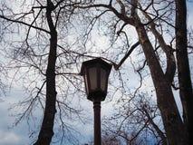 Mooie lantaarnpaal dichtbij bomen Royalty-vrije Stock Afbeelding