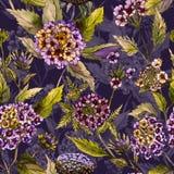 Mooie lantanabloemen met groene bladeren op purpere achtergrond Naadloos de zomer bloemenpatroon Het Schilderen van de waterverf Royalty-vrije Stock Foto's