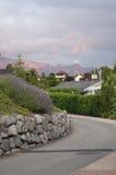 Mooie Lavendel naast een Weg Royalty-vrije Stock Fotografie