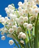 Mooie lelie-van-de-vallei bloemen Stock Foto
