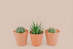 Mooie Leuke Cactus in uitstekende conceptenstijl Stock Fotografie