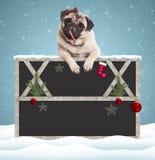 Mooie leuke pug puppyhond die suikergoedriet eten en met poten op leeg bordteken hangen met houten kader en Kerstmis decorat Royalty-vrije Stock Afbeeldingen