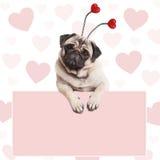 Mooie leuke pug puppyhond met hartendiadeem, die op lege bleek hangen - roze promotieteken Royalty-vrije Stock Fotografie