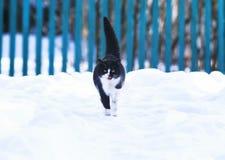 Mooie leuke richels op witte pluizige sneeuw en miauwen in w royalty-vrije stock foto's