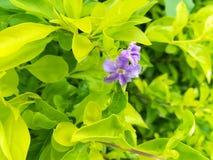 Mooie lichtpaarse bloemen Royalty-vrije Stock Fotografie
