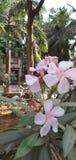 Mooie lichtrose bloemen in de tuin stock afbeeldingen