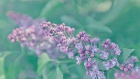 Mooie lilac achtergrond Pastelkleur purpere kleuren Lentetijd in aard Stock Afbeelding