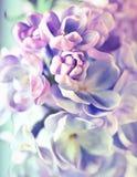 Mooie lilac bloemen royalty-vrije stock afbeelding