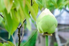 Mooie Lotus-bloem dichte omhooggaand stock foto