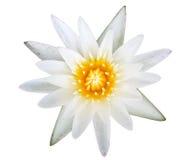 Mooie lotusbloem Royalty-vrije Stock Afbeelding