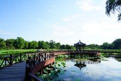 Mooie lotusbloem in het Oude Park van het de Zomerpaleis met Paviljoenen royalty-vrije stock foto's