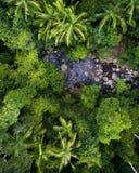 Mooie luchtscène over een regenwoud en een kleine kreek royalty-vrije stock foto's