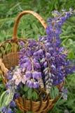 Mooie lupinebloemen in een rieten ronde mand stock fotografie