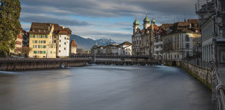 Mooie Luzerne Stock Afbeelding