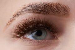 Mooie macrofotografie van het oog van een vrouw met extreme samenstelling van lange wimpers Perfecte lange wimpers zonder schoonh royalty-vrije stock fotografie
