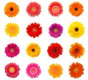 Mooie madeliefjebloemen Stock Foto's
