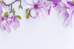 Mooie magnoliabloemen royalty-vrije stock afbeelding
