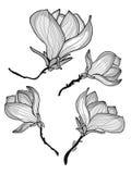 Mooie magnoliabloemen Royalty-vrije Stock Afbeeldingen