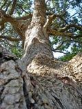 Mooie majestueuze Afrikaanse boom van een verschillend standpunt stock foto