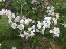 Mooie majestueuze bloemen Stock Afbeelding