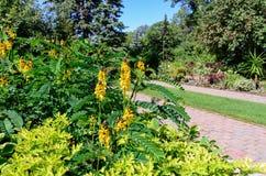 Mooie mening bij kleurrijke bloemen Stock Foto