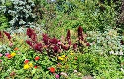 Mooie mening bij kleurrijke bloemen Stock Afbeelding