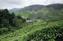 Mooie mening in Cameron Highlands, Maleisië met de groene aanplanting van de aardthee dichtbij de heuvel royalty-vrije stock foto's