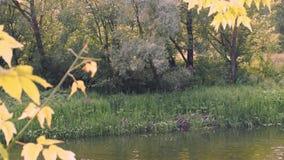 Mooie mening door de rivier stock footage