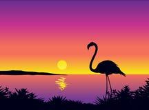 Mooie mening met flamingo Stock Foto