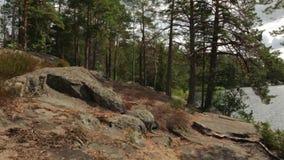 Mooie mening over aardlandschap van rotsachtige bosheuvel Lange bomen, groene installaties, geel gras en meer neer op de kustlijn stock video