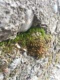 Mooie mening over de combinatie van steen en mos royalty-vrije stock afbeeldingen