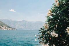 Mooie mening over Kotor-baai van eiland stock fotografie