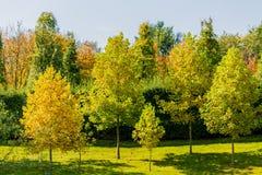 Mooie mening van de herfst in een park met groene en gele bomen stock afbeeldingen