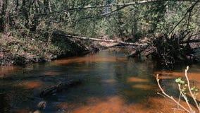 Mooie mening van de rivier in het bos met een snelle stroom Langzame Motie stock video