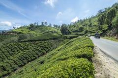 Mooie mening van de theeaanplantingen Stock Foto