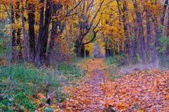 Mooie mening van de weg door het de herfstpark Royalty-vrije Stock Foto's