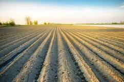 Mooie mening van het geploegde gebied op een zonnige dag Voorbereiding voor het planten van groenten Landbouw Landbouwgrond Zacht royalty-vrije stock foto