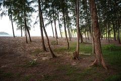 Mooie mening van Koh Lipe Island en hemel van het bos van de pijnboomboom Stock Afbeeldingen