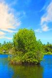 Mooie mening van Meer Koggala, Sri Lanka Royalty-vrije Stock Foto