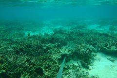 Mooie mening van onderwaterwereld met dode koraalriffen Blauw water en witte zandbodem snorkeling royalty-vrije stock afbeeldingen