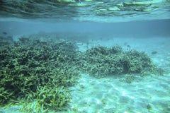 Mooie mening van onderwaterwereld met dode koraalriffen Blauw water en witte zandbodem snorkeling Indische Oceaan stock foto