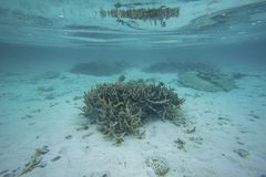 Mooie mening van onderwaterwereld met dode koraalriffen Blauw water en witte zandbodem snorkeling stock afbeelding
