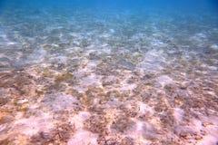 Mooie mening van onderwaterwereld met dode koraalriffen Blauw water en witte zandbodem snorkeling r royalty-vrije stock afbeeldingen