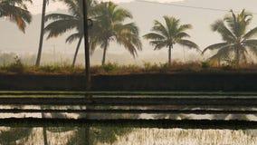 Mooie mening van overstroomd padieveldgebied met een weg tijdens zonsopgang in India stock videobeelden