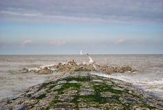 Mooie mening van overzeese kust royalty-vrije stock afbeelding