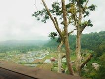 Mooie mening van padievelden en dorp met bomen royalty-vrije stock afbeeldingen