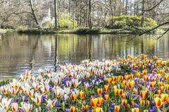 Mooie mening van rode gele en witte tulpen bij de kust van een meer met bomen royalty-vrije stock afbeelding